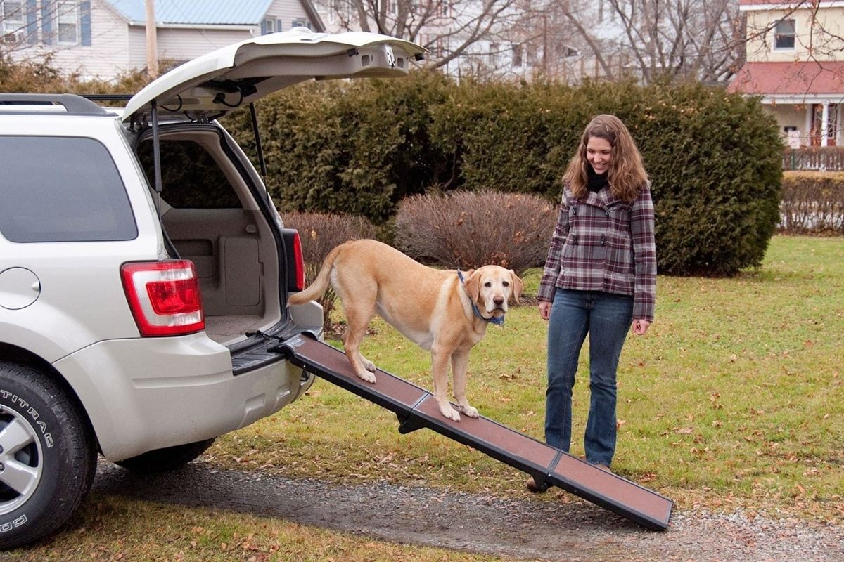 Best Dog Car Uk