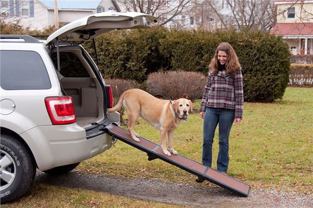 10 useful car accessories for dog owners | | Honest John