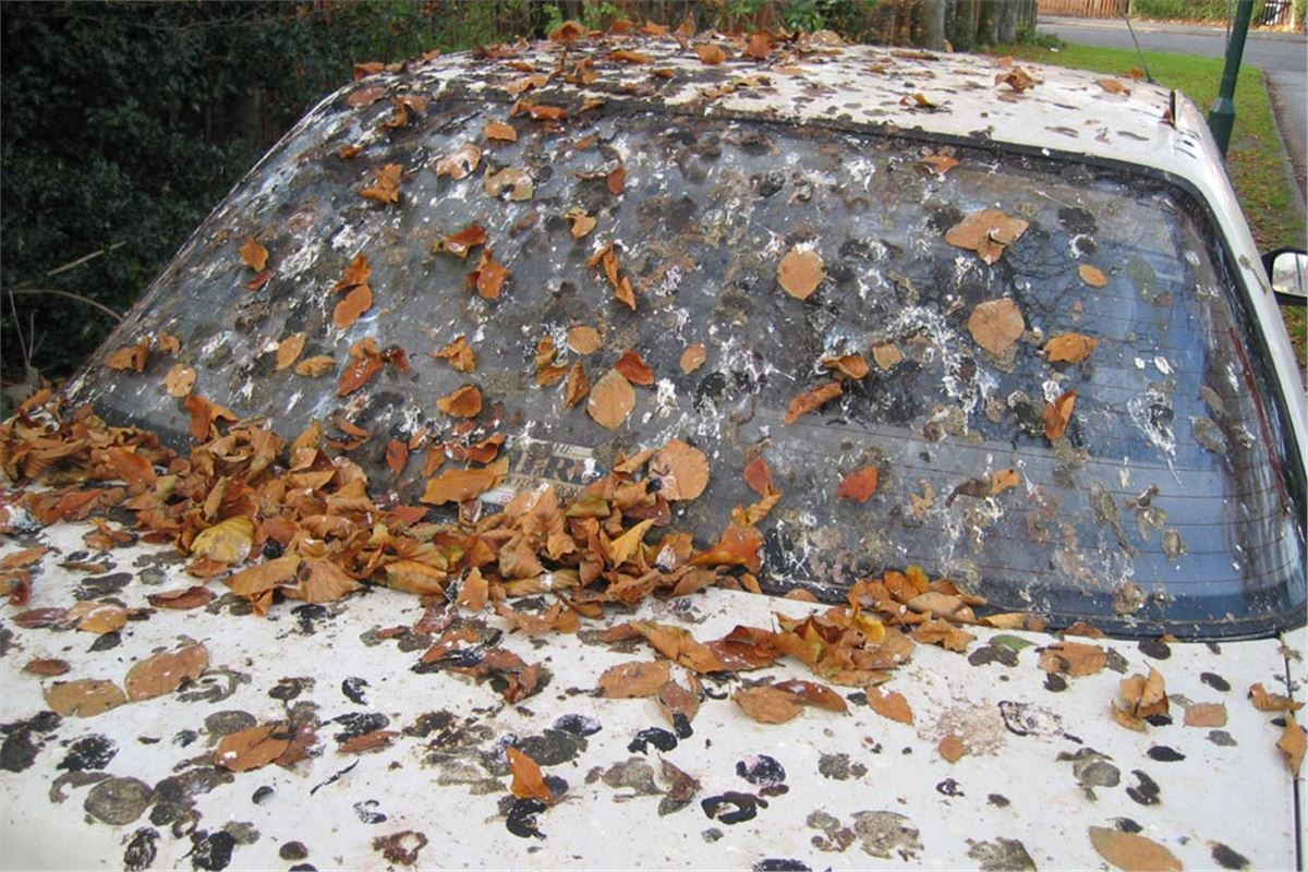 Honda Parts Cheap >> Why Bird Droppings Damage Car Paintwork   Motoring News   Honest John